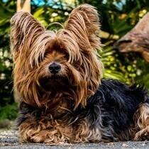 Foder og tilbehør til hunde